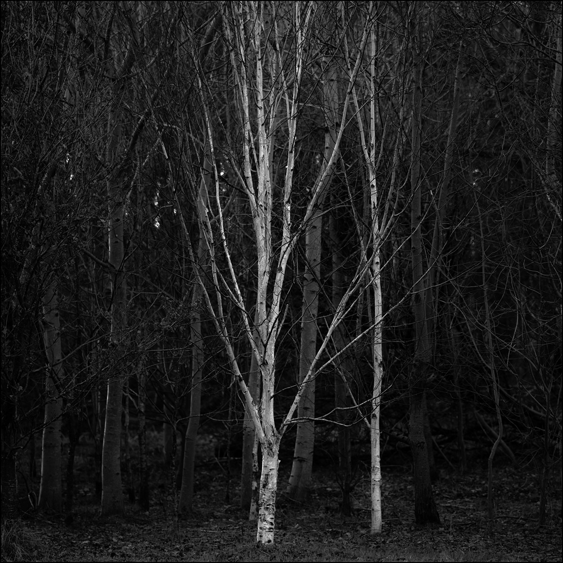 Haggs-white-tree ©Paul Hampton Photographer Glasgow