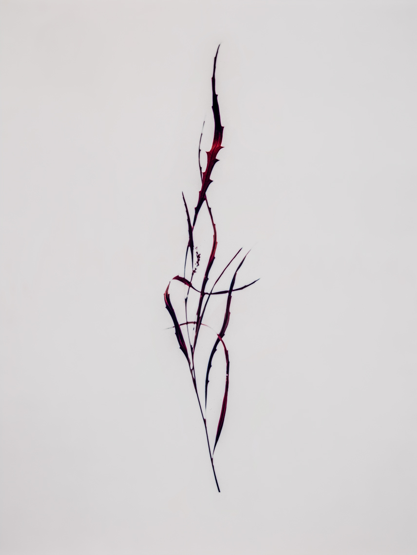 Red-Plant-2015 ©Paul Hampton Photographer Glasgow