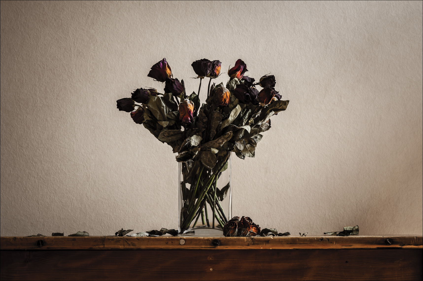 dead-flowers-2015 ©Paul Hampton Photographer Glasgow