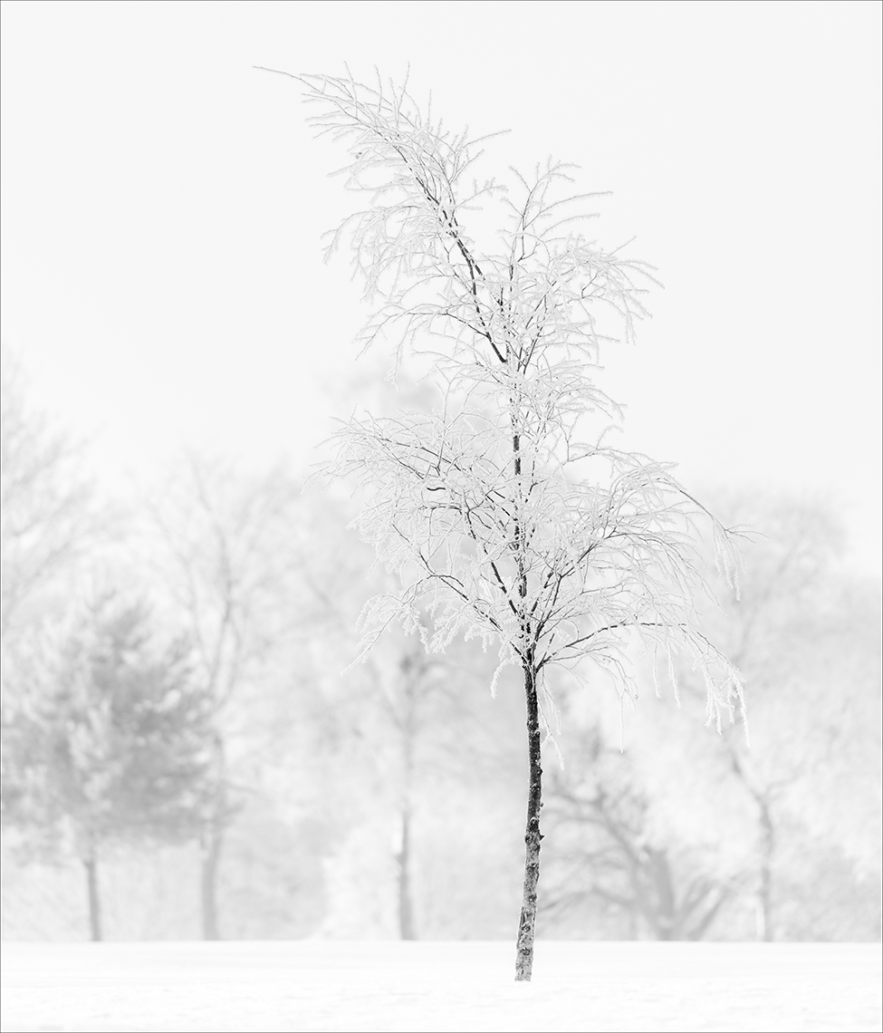 snow-tree-haggs ©Paul Hampton Photographer Glasgow